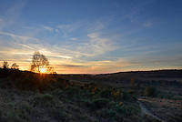 Late autumn sunset in the New Forest, Hampshire, UK