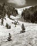 USA, Colorado, ski run and trees, Telluride (B&W)