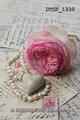 Gisela, FLOWERS, BLUMEN, FLORES, photos+++++,DTGK1898,#f#
