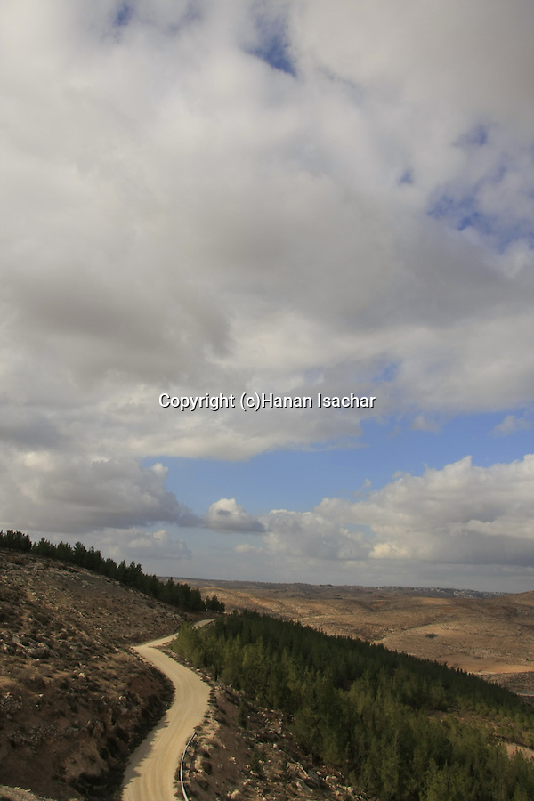 Israel, Southern Hebron Mountain, Yatir Forest Scenic Road near Tel Yatir