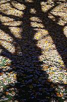Shadow of tree on fallen autumn leaves, Zurich, Switzerland