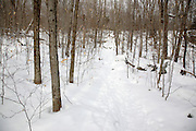 The snow-covered Mt Tecumseh Trail in Waterville Valley, New Hampshire during the winter months.