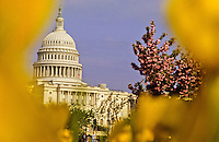The Capitol in Washington DC, USA
