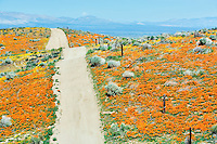 Road through Antelope Valley Poppy Preserve, California