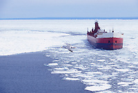 A gull flies over Lake Superior as a freighter enters the upper harbor of Marquette, Mich. through ice.
