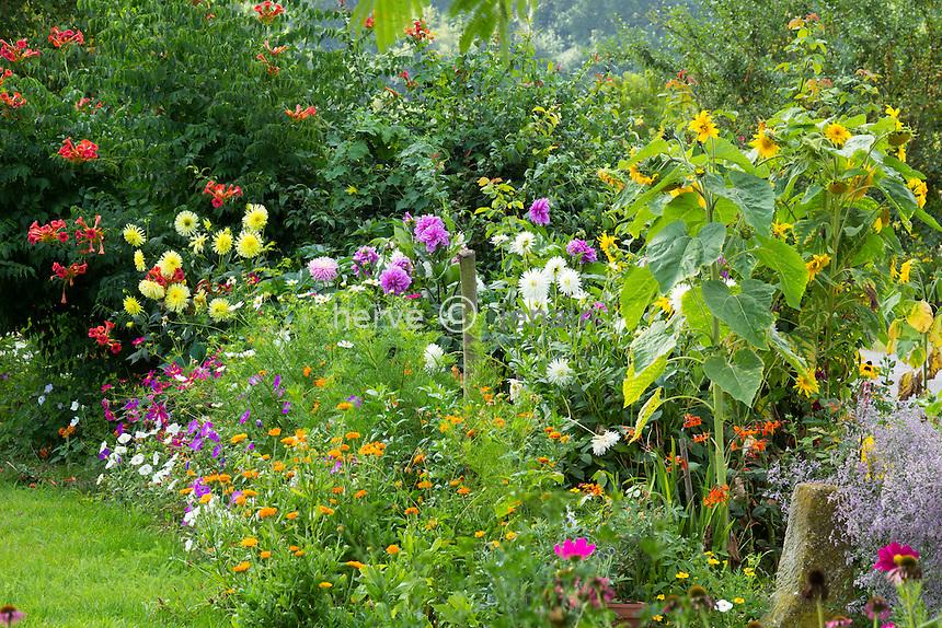 Bedding with marigold, Dahlia, sunflower, Petunia, Cosmos, Campsis radicans // Massif avec soucis, tagettes, dahlias, tournesol, cosmos, pétunia, bignone