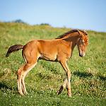 20160802 Voelker Horses
