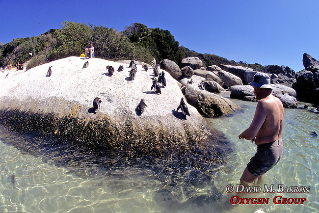 African Penguins & People Observing Them