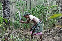 Afrika ANGOLA Calulo, Frau hackt Kaffeepflanzen frei auf Fazienda von Fernando Sobral / Africa ANGOLA Calulo, coffee fazienda of  Fernando Sobral, woman cleans the coffee farm