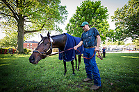 LOUISVILLE, KY - MAY 01: Mccraken grazes outside his barn at Churchill Downs on May 01, 2017 in Louisville, Kentucky. (Photo by Alex Evers/Eclipse Sportswire/Getty Images)