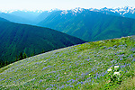 July 2012: Hurricane Ridge, WA