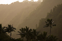 Early morning sunlight created a silhouette mood among the mountainside of Waimea Valley with palm tree swaying in the foreground.