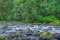 ORCAN_D166 - USA, Oregon, Mount Hood National Forest, Salmon-Huckleberry Wilderness, Lush spring vegetation borders the Salmon River - a federally designated Wild and Scenic River.