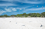 Cook Island Bird Sanctuary in Kiritimati, Kiribati. A sanctuary for many endangered species of birds.