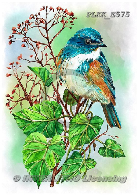 Kris, REALISTIC ANIMALS, REALISTISCHE TIERE, ANIMALES REALISTICOS, paintings+++++,PLKKE575,#a#, EVERYDAY ,birds