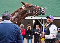 May 1, 2014: California Chrome, trained by Art Sherman, gets a bath as exercise rider Willy Delgado tries to handle the rambunctious colt while groom Raul Rodrigues tries to bathe him. Scott Serio/ESW/CSM