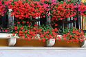 Geraniums along balcony in Venice, Italy