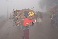 Ethiopia, monti di Entoto, portatrici di legname.women carring eucaliptis wood