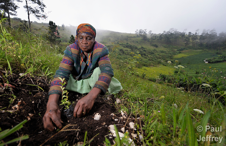 Izimene Aksi, 60, clears growth from around a tree planted as part of a hillside reforestation project in the mountainous community of Foret-des-Pins, Haiti. Plagued by deforestation, much of it to produce charcoal for urban cooking stoves, residents of the natural reserve are working with advisors from the Lutheran World Federation to reforest and protect their environment. The project is funded in part by International Orthodox Christian Charities..