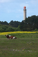 Europe/France/Bretagne/56/Morbihan/ Belle-Ile-en-Mer/Kervilahouen: le grand phare  édifié de 1826 à 1835 sur des plans de l'ingénieur Augustin Fresnel