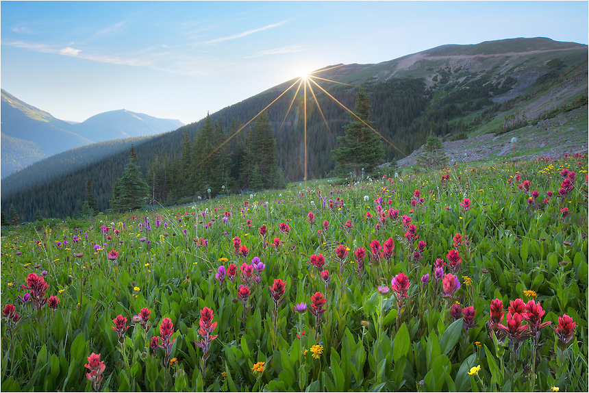 One of these days I'll write a blog about my favorite locations to photograph Colorado wildflowers amid sweeping landscapes. In the top 5 on that list would be a not-as-well known area (except to locals) close to Berthoud Pass called Butler Gulch (actually closer to Empire than Winter Park). In the summer of 2014 the colors were the best I'd seen - and I'd visited the iconic Colorado locations like American Basin near Lake City and Yankee Boy Basin near Ouray earlier in the summer. I imagine the landscapes near Crested Butte were excellent this summer, but I hit that location a bit early.<br />