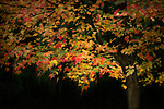 All the lovely colors of autumn on one tree.
