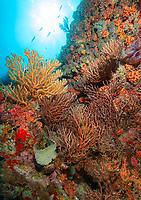 Bull Point Reef Scenic