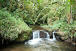 Cascades on stream in rainforest at 950 metres, Ranomafana National Park, Madagascar