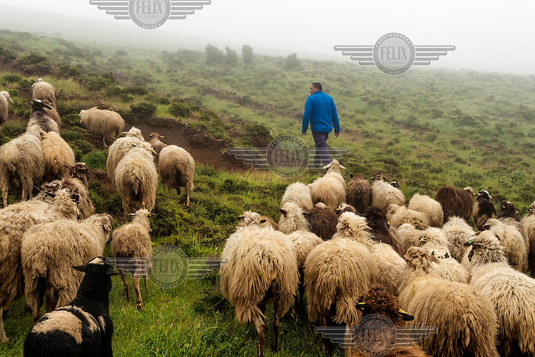 A shepherd leads his flock of sheep through the sea mist hanging over the slopes of Hierro Island's volcanic hills. /Felix Features
