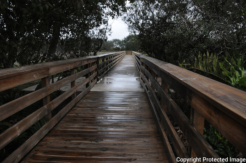 Rain Soaked Boardwalk located at Wakodahatchee Wetlands, Delray Beach, Florida, after a thunderous afternoon rain shower.