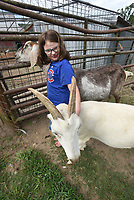 Aspen Boger, 10, basks in goat love at her grandmother's farm on Hickory Creek Road. Connie Boger is usually on the road with her animals during summer. This year she's staying home and operating a farm-animal petting zoo on weekends.<br />(NWA Democrat-Gazette/Flip Putthoff)