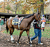 Robbinette before The Xtra Heat Stakes at Delaware Park on 10/27/12...