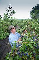 Blueberry Farmer, Vincentown, New Jersey
