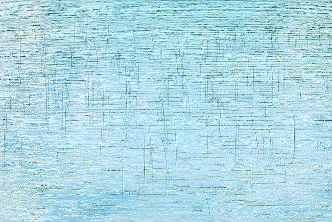 reeds in water E. Washington State