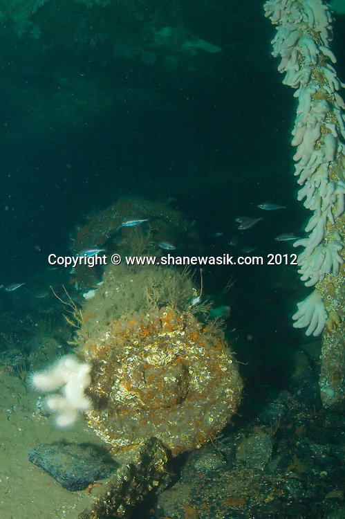Parts of a winch in the hold of the shipwreck S.S. Burnstone, coal lying beneath.