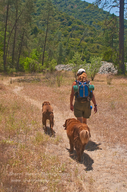 Woman hiking with her dogs along the North Fork of the American River, Weimar, California.