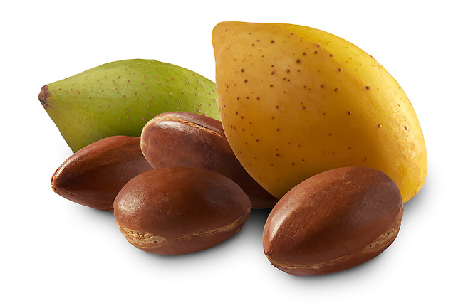 Fresh Argan nuts with outer skins and Argan nuts in their shells against a white background