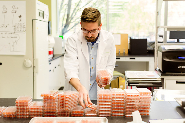 April 19, 2016. Morrisville, North Carolina. <br />  Research assistant Bryan LeBlanc sorts trays of insect food to be used in experiments on a variety of soy bean strains.<br />  The Bayer Crop Science Innovation Center was established in 2010 and employs researchers in genetics, genomics and agricultural biotechnology. Much of the company&rsquo;s seed and trait R&amp;D goes through this center, which is located just miles from the Bayer greenhouses that will grow the seeds developed at the Innovation Center.