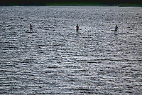 Three paddleboarders  navigate their small craft toward the shoreline in the late afternoon sun on Hoover Reservoir in Columbus, Ohio.