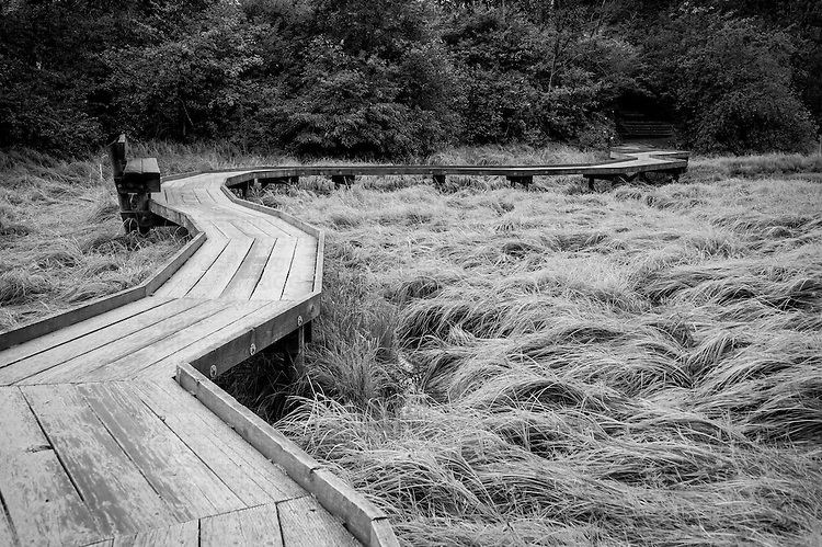 A crooked wooden path through tall grasses.