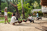 PHILIPPINES, Palawan, Barangay region, young Batak men in Kalakwasan Village train their fighting cocks