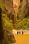 A group of young men hike the Virgin River Narrows in Zion National Park, Utah.