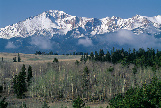 Snowcapped Pikes Peak above spring aspen trees near Colorado Springs, CO