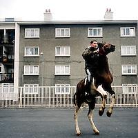 Irish Horse Culture Galleries