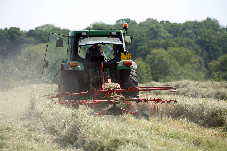 Farmer with tractor and rake rowing hay in summer meadow