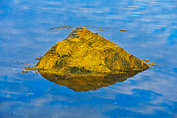 Reflection of rock in pool, Harrigan Cove, Nova Scotia, Canada