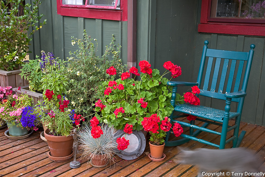 Vashon Island, WA<br /> Colorful deck with potted flowers and blue rocker, Ellisport