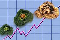 Crisi economica della famiglia. Economic crisis of family..Aumento dei prezzi dei prodotti alimentari....