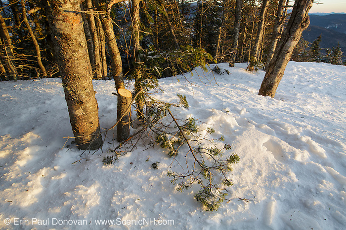 January 2015 - Tree cutting on the summit of Mount Tecumseh in Waterville Valley, New Hampshire USA during winter months.