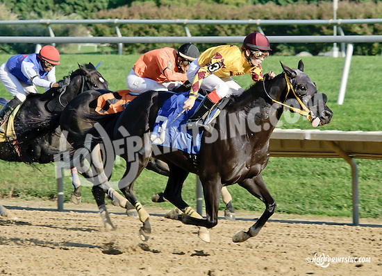 Satch winning at Delaware Park  on 10/8/14